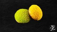mini_choux_citron_menthe